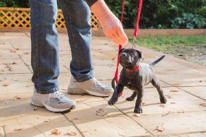 Pet Behavior Consultation Sacramento